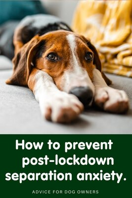 6 ways to prevent post-lockdown separation anxiety