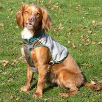 Scruffs Insect Shield Dog Vest XS x 1