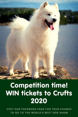 Would you like to win tickets to Crufts 2020?