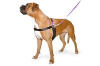 Ancol Pure Dog Listener Harness & Lead Set Medium Size 4-6 x 1