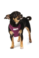 Doodlebone Mesh Harness Medium - Purple x 1