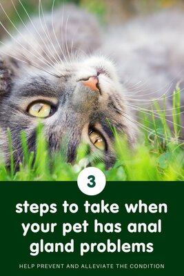 Anal gland problems in cats and dogs