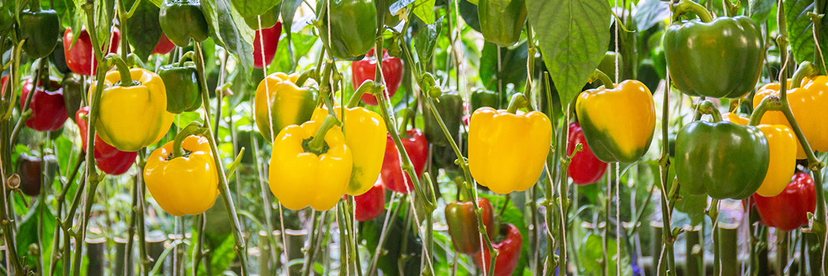 To help you make the right choices for your horticultural business