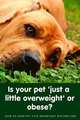 Is your pet overweight or obese?