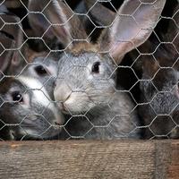 1.05m Wire Rabbit Netting 1mm 50m