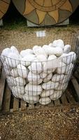 WHITE ROUNDED ROCKS EACH PROMO PRICE
