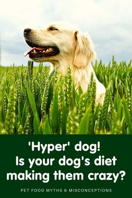 How to deal with a 'hyper' dog