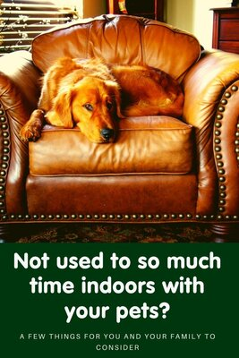 Staying home with your pet