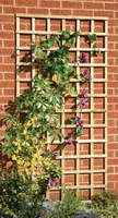 Trellis Pressure Treated 1.83m(W) x 610mm(H) Green