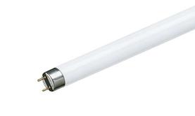 T8 Fluorescent