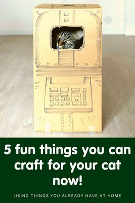 5 fun things you can craft for your cat now!