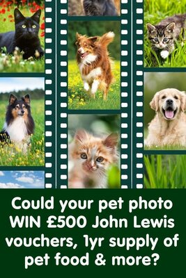 Our big photo competition is back!