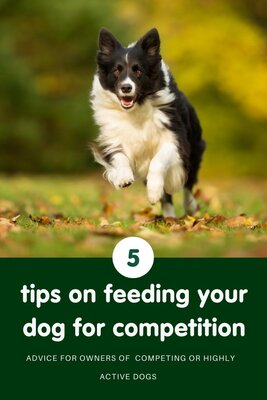 Feeding for competition: 5 things every owner should know!