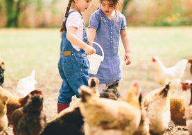 Kids feeding hens on the farm