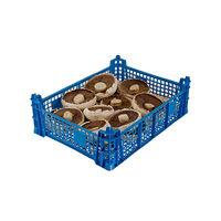 Flat Breakfast Mushrooms -(2.27kg)