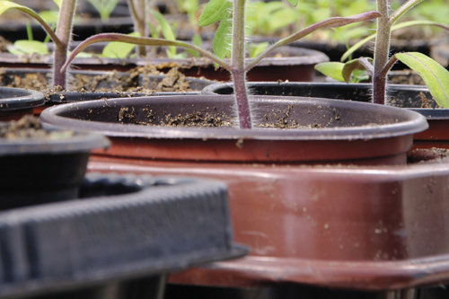 Pots, Containers & Trays
