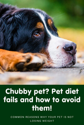 Common pet diet fails and how to avoid them!