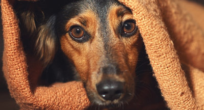 10 calming tips for anxious dogs