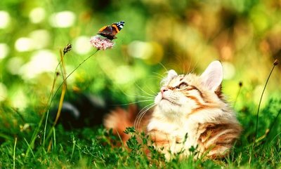 Summer allergies in cats and dogs