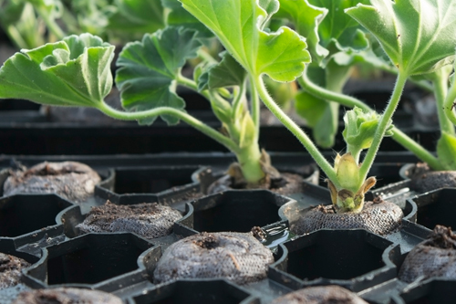 Plant Propagation and Cultivation