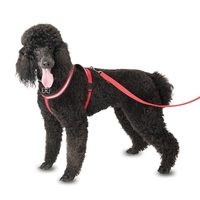Company of Animals Comfy Harness Size 1/Toy (Chest 42-50cm) Red