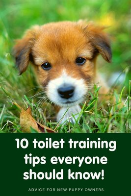 10 toilet training tips every new puppy owner should know!