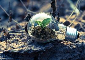 Plant Growing Lighting