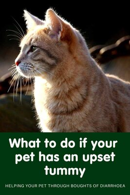 What to do if your pet has an upset tummy!