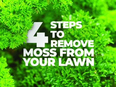4 Steps To Remove Moss From Your Lawn