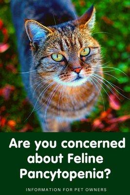 Information regarding Feline Pancytopenia