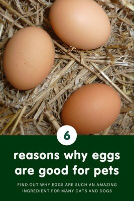 Amazing eggs! 6 reasons why we include them in our recipes