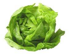 Round Lettuce