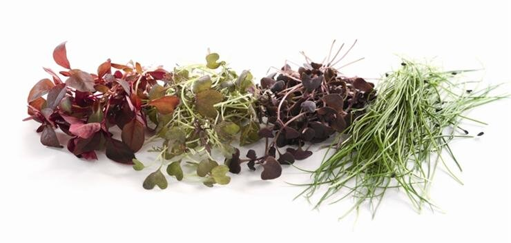 Punnet Microherb