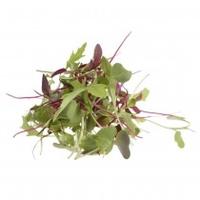 Micro Micro Leaf