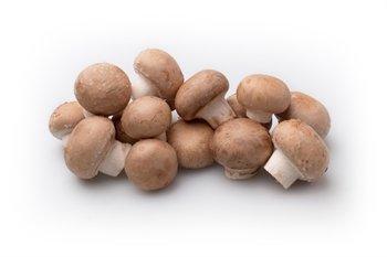 Chestnut Mushroom