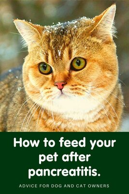 How to feed your pet after pancreatitis
