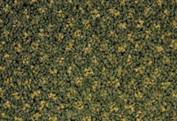SPECTRUM DOT 438710 4M HEDGE GREEN