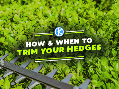 How & When to Trim Your Hedges