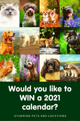 Would you like to win one of our 2021 calendars?