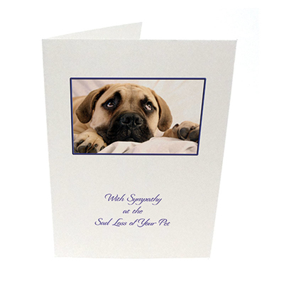 Purfect Sympathy Cards 5pk - Style  2