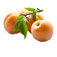 Apricot (Pack)
