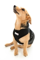 Doodlebone Mesh Harness X-Small - Black x 1