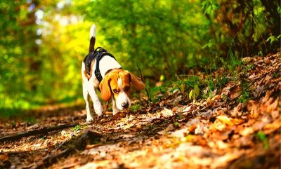5 ways to stop your dog eating poo!