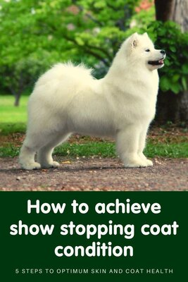 Achieve show stopping coat condition