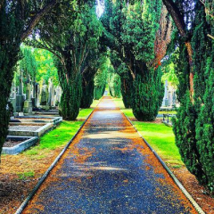 Family Fun at Glasnevin Cemetery Museum