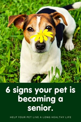 6 signs your pet is becoming a 'senior'