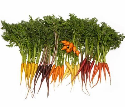 Bunch Coloured Baby Carrots