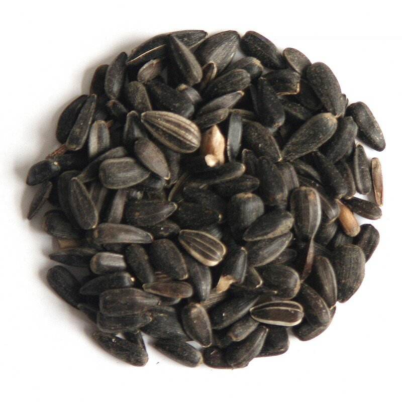 Hutton Mill Black Sunflower Seed 13kg