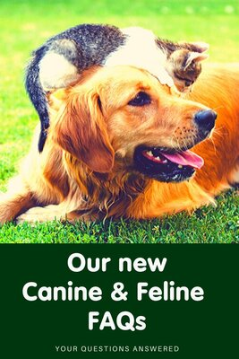 Our new cat and dog FAQs