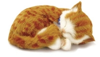 Breathing Soft cat
